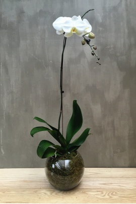 single_orchid_with_round_vase1