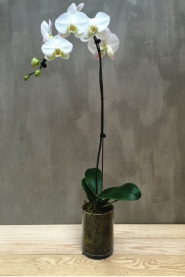 single_orchid_with_tube_vase_2