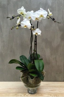 three_orchids_with_vase